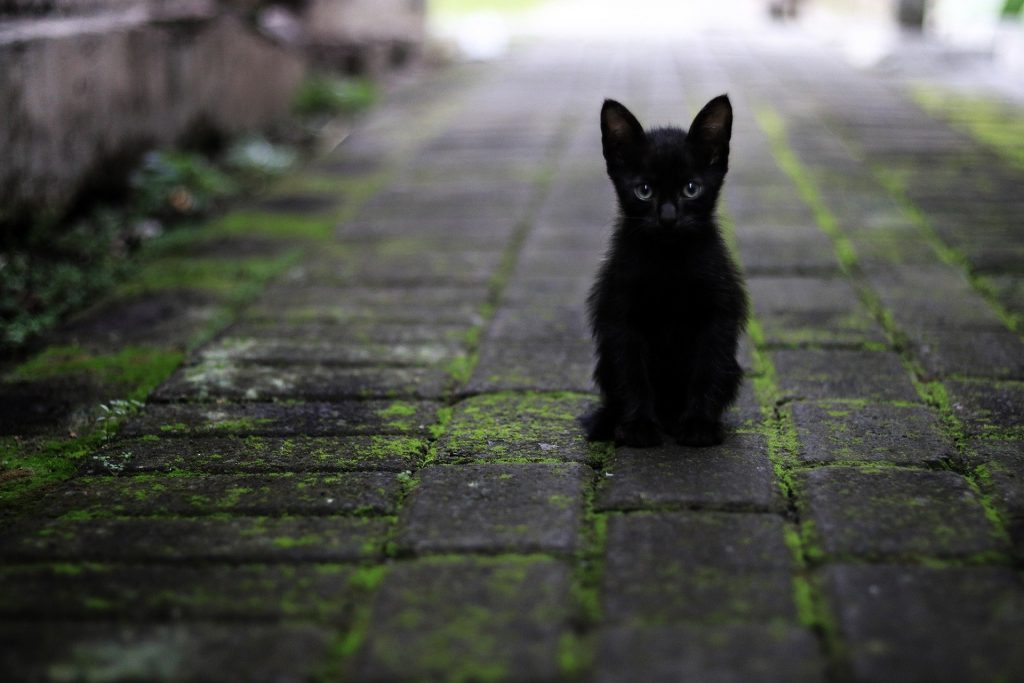 El gato negro es el más dulce